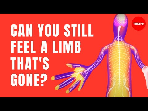 The fascinating science behind phantom limbs - Joshua W. Pate