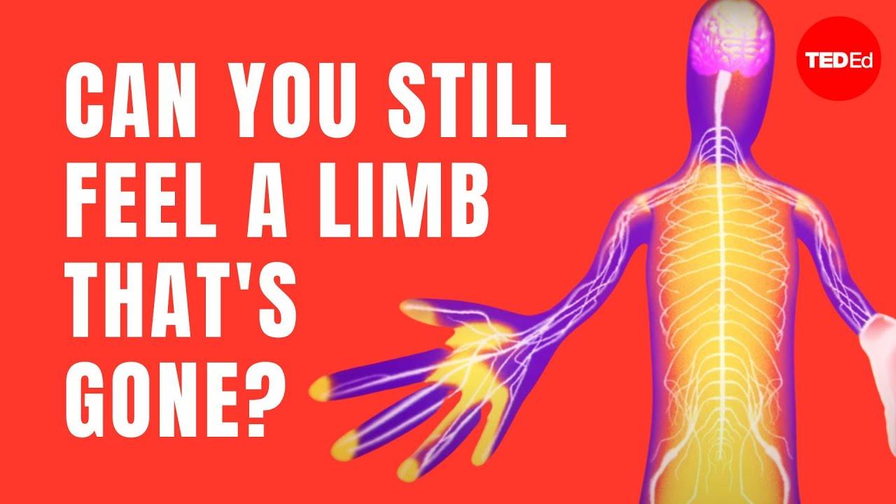 Download The fascinating science behind phantom limbs - Joshua W. Pate