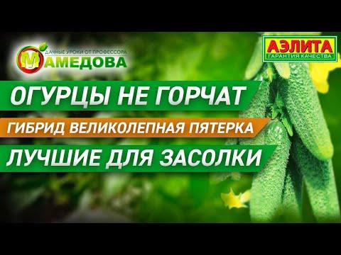 Огурцы не горчат. Гибрид Великолепная пятерка. Лучшие для засолки | выращивание | огурцов | семена | сорта