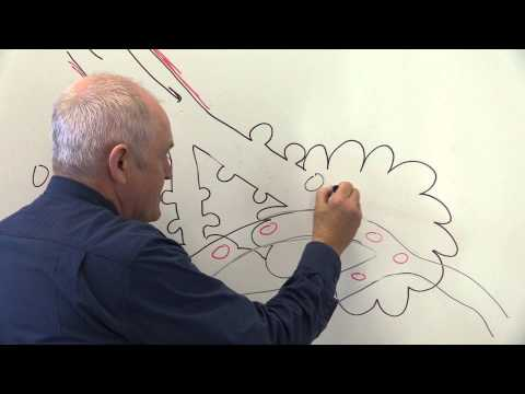 Respiratory System 4, Alveoli and gaseous exchange