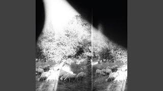 Lambs' Breath