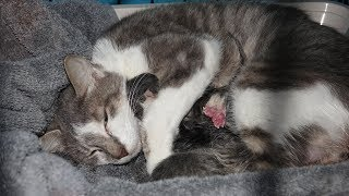 Rescued Momma Cat Gives Birth to 4 Kittens