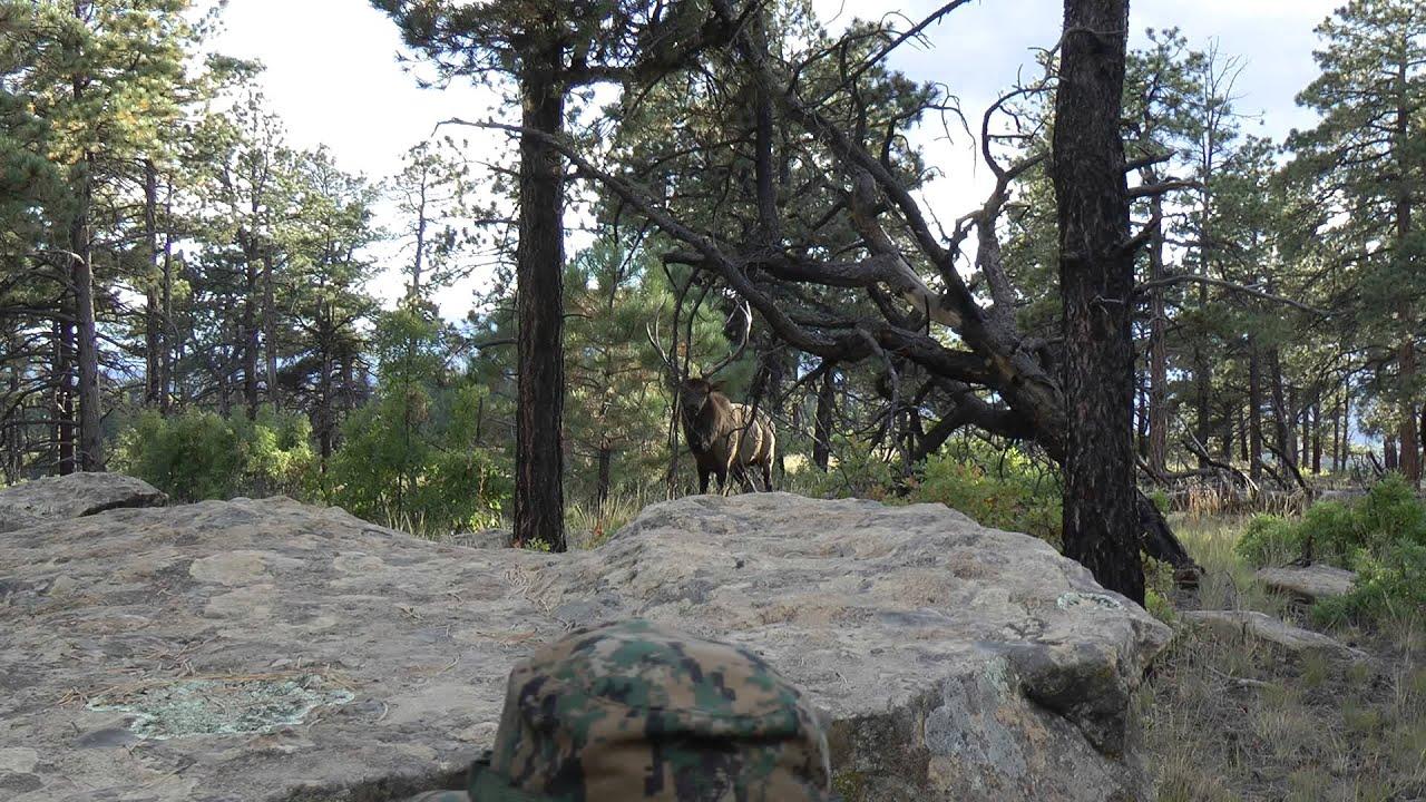 Elk Joes