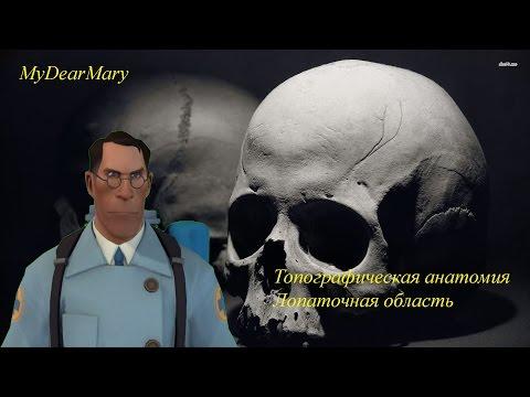 Анатомия — Википедия