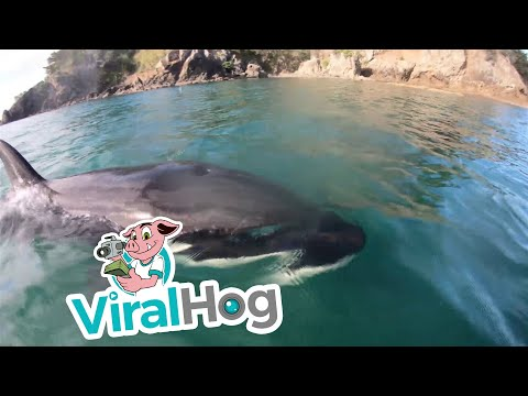 JT - Kayaker Has Some Fun with Orcas