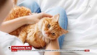 Незвичні способи, якими коти висловлюють любов