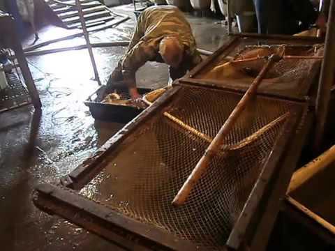 Вирощування риби - YouTube
