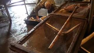 купить малька речной рыбы карпа толстолоба амура для зарыбления озер Low.