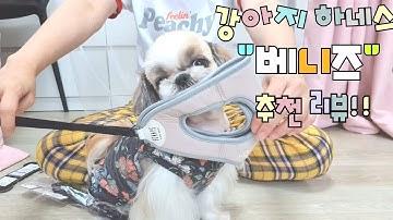 강아지 하네스가 자꾸 빠진다? 강아지 하네스 안전하게 사용하는 방법!! 베니즈 하네스 추천!!