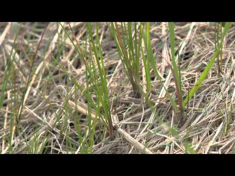 Stormwater Strategies: Erosion & Sediment Control