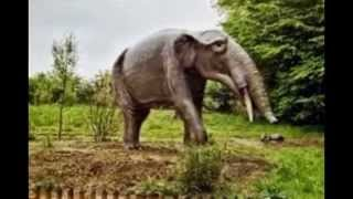 Proboscidea: Evolution of elephant (early miocene): Gomphotherium