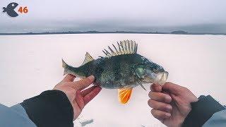 Окунь-гигант на закрытии сезона зимней рыбалки. Победил Зауломское озеро!