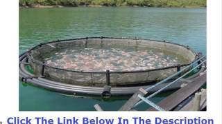 Tilapia Farming In Florida +++ 50% OFF +++ Discount Link