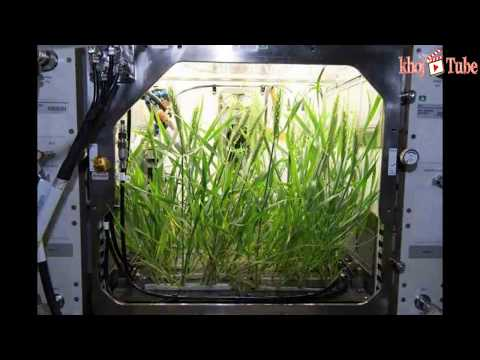 NASA mission: The Advanced Plant Habitat in space