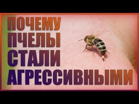 Почему пчелы злые?Смена погоды или химия?В чём причина агрессии?