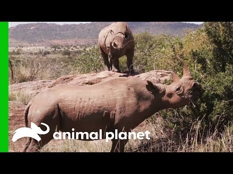 Bobby the Rhino Poops to Communicate With His Species | Evan Goes Wild: Passion and Purpose