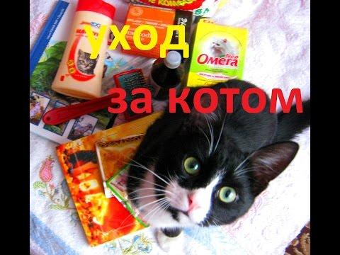 заводим котёнка уход за котёнком и котом