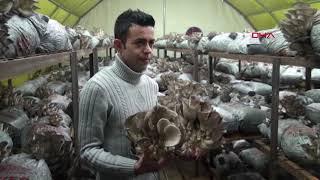 Genç girişimci ayda 3 ton istiridye mantarı üretiyor