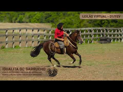 Lote 21 - Igualita do Garrucho