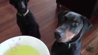 How To Feed Two Dogs At Once | Dog Training Tips