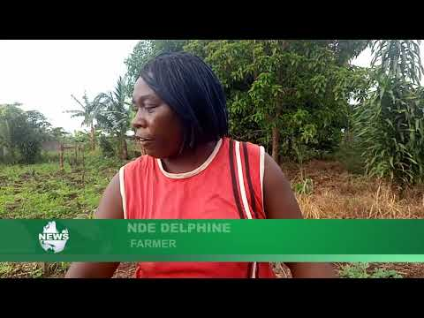 SOUTHWEST CAMEROON: FARMERS BATTLING WITH CLIMATE CHANGE