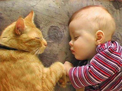 Приколы с детьми  Маленькие дети и кошки  Ржач