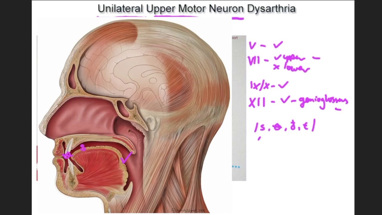 Upper Motor Neurons Definition Anatomy   motorcyclepict.co
