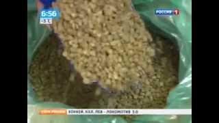 купить ягоды годжи  в украине