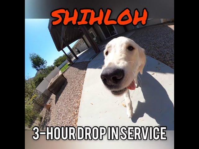 SHILOH'S 3-HOUR STAYCATION