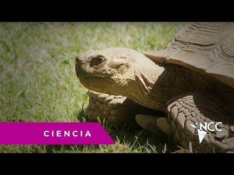 Zoológico de Guadalajara, un edén para especies en extinción