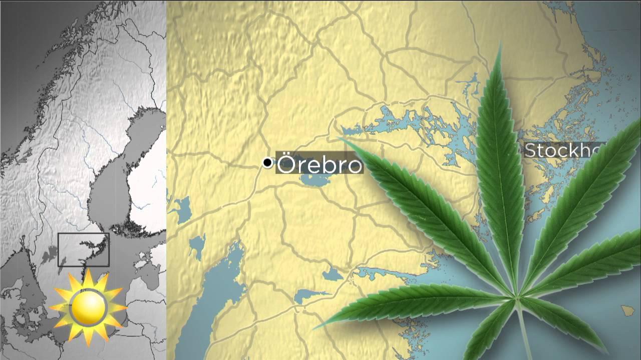 Cannabis i orebros vatten