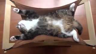 Кот спит как человек