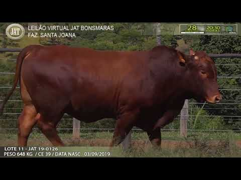 LOTE 011