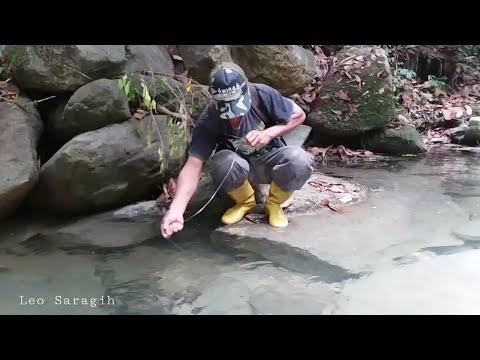 Mancing Sidat Di Bawah Batu Sungai Jernih, STRIKE Nya Seru