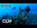 Mission Blue | Clip - The Ocean Is Dying [HD]| Netflix