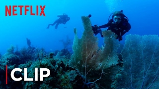 Mission Blue - Clip - The Ocean Is Dying - Netflix - [HD]