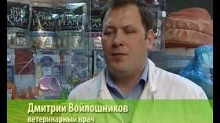 "ТВ-программа ""ЗОО Академия"" канала 1vch"