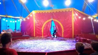 Elano dog act Circus  veron