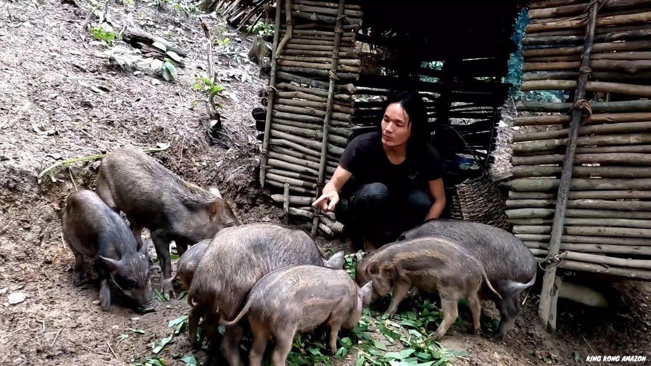 Download Wild boars, They Make Me Very Hard, Survival Instinct, Wilderness Alone, survival, Episode 158
