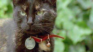 Кошки: BBC