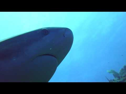 Friendly Belize shark giving a wink hello...