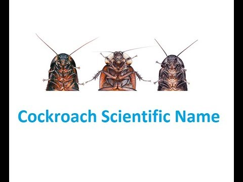 Scientific Name of 11 Different Types Cockroach | Best roach killer