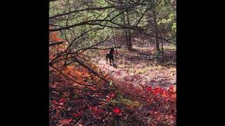 Осенняя прогулка с доберманом Бонбон