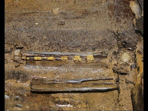 Jeweled swords found in 2,000-yr-old Chinese cemetery