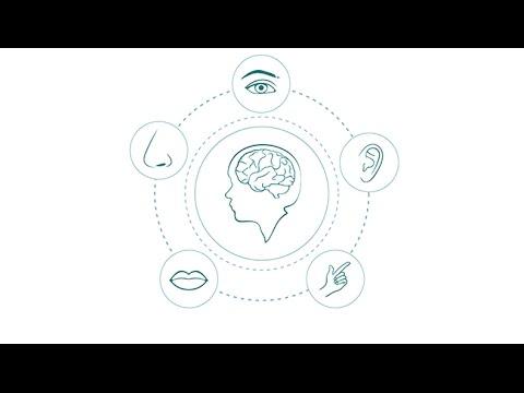 Senses and Sensibility: A Brain Awareness Week Webinar