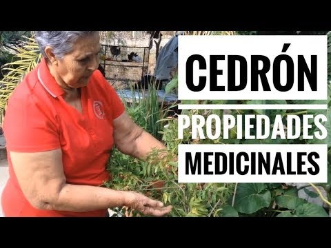 Cedrón | Usos medicinales