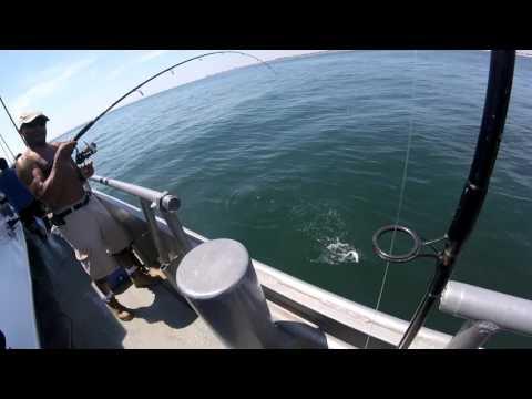 Blues Fishing 2017: