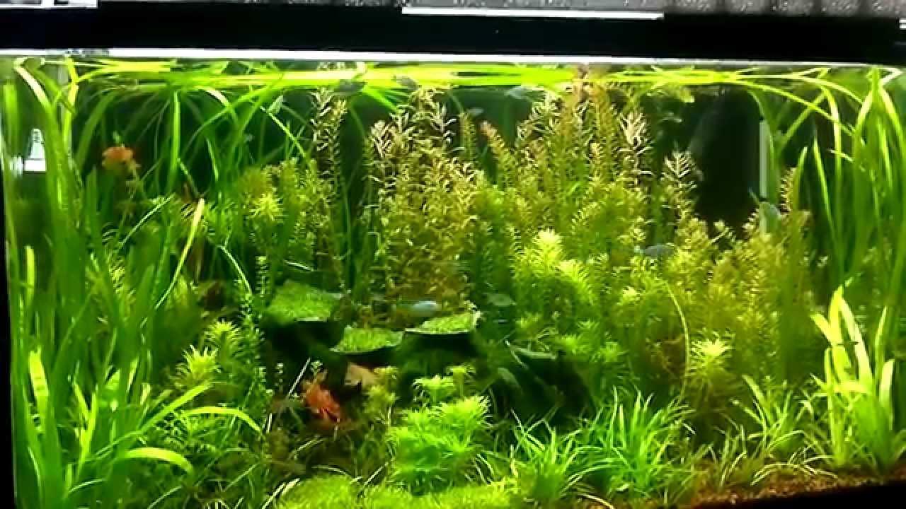 Aquascape Jungle Style Youtube