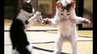 قطة ترقص