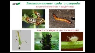Татьяна Гаас.Экология почвы сада и огорода.(, 2015-01-18T18:18:25.000Z)